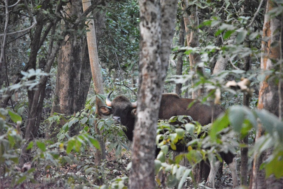 Odisha 6. Debrigarh Wildlife Sanctuary, Sambalpur